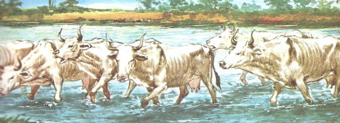 The Seven Skinny Cows.