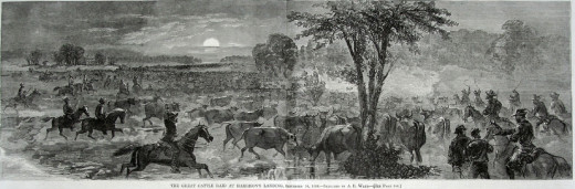 Sketch - Rebels raid a Union Cattle Depot