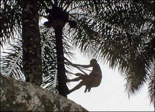 Man on palm tree