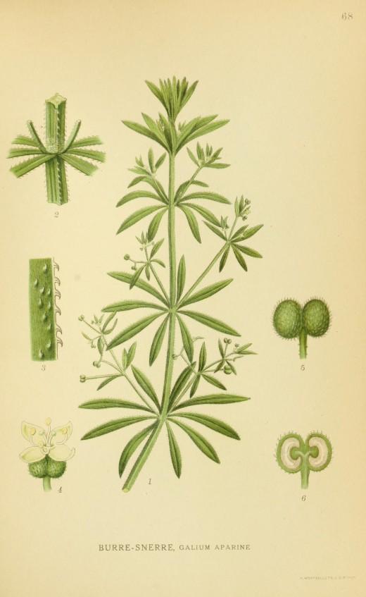 Billeder af Norden's Flora 1917-1927