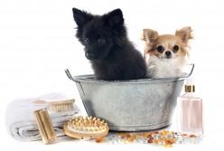 Easy Homemade Pet Shampoo