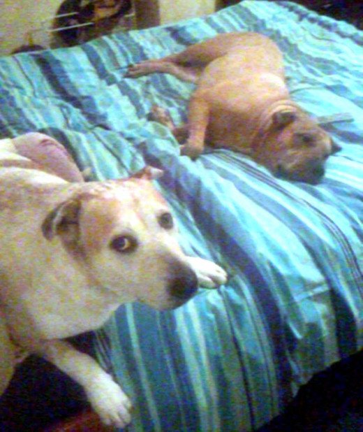 Squeaker (on the left) with Millie, lazing around on the bed.