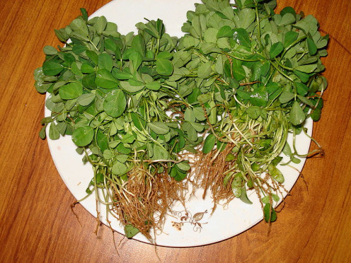 Both methi leaves and seeds are used for medicinal purposes