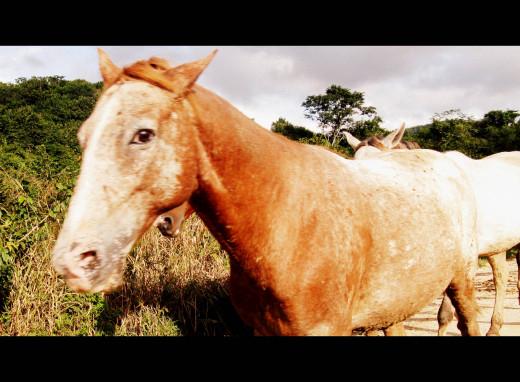 Chaa Creek horses