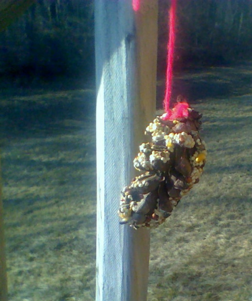 A pine cone feeder on our back deck helps out the feathered ones who stay up north for the winter.