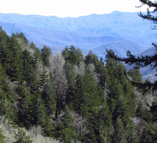 The view from the top of the Smokey Mountains was breathtaking.