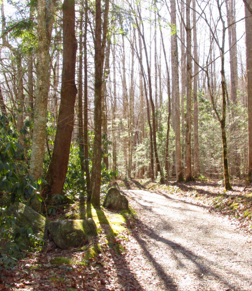 The pristine mountain wilderness has many hiking trails that offer serene peace.
