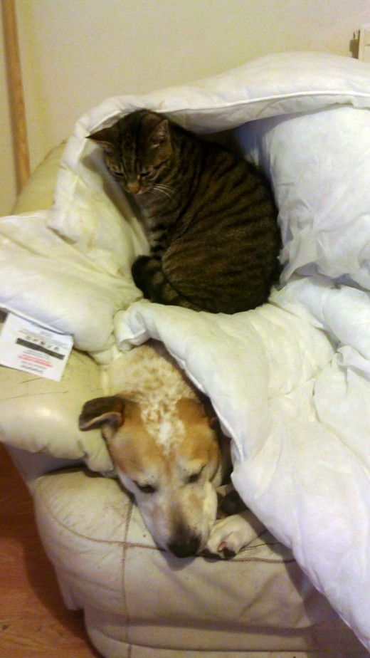 My animals' version of bunk beds: Pepper sitting on top of Squeaker.