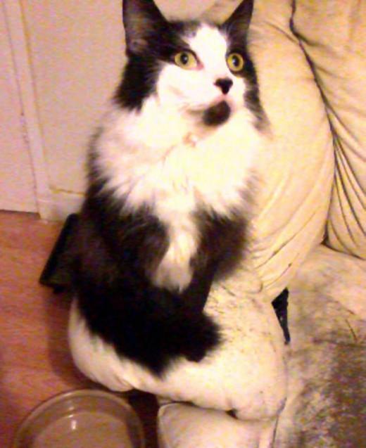 Joseph, a nervous and rather anti-social cat.
