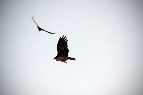 Bird Gods and Goddesses Associated With Birds of Flight