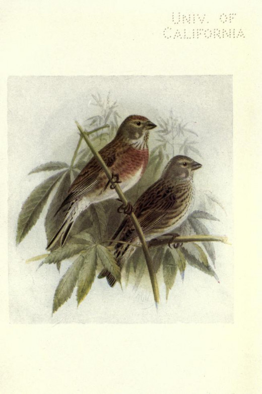 Birds of Britain ---Bonhote {1907}
