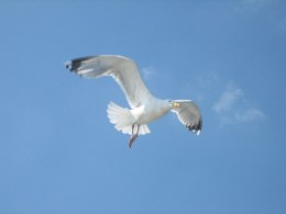 Manannan Mac Lir might try to get your attention by coming to you in the form of the seagull.
