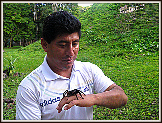 Our guide calming the tarantula before he puts it on Andy.