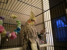 And here is Ruby. She is the bossier one, and likes to eat more, but really  won't come out of the cage yet.