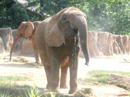 Original photo, taken at the Riverbank Zoo in Columbia, SC
