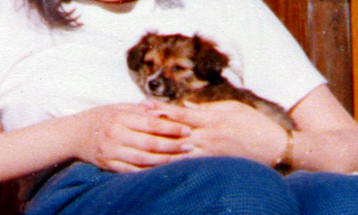 Susie as a puppy on her first day with us, when she was the size of a small cuddly toy.