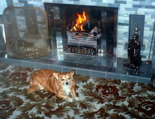 Susie my dog relaxing in front of our coal fire, which she loved on those cold winter days.