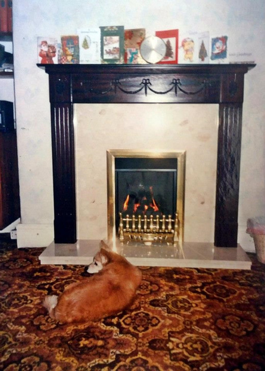 Susie the dog spent many more happy nights relaxing in front of the fire following her operation.