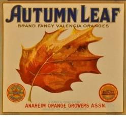 Autumn Leaf free cross stitch pattern