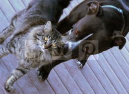 Are pit bulls aggressive?