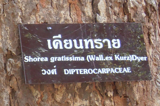 Thai National Park tree identification plaque.