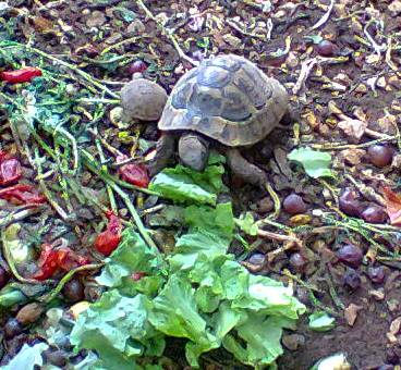 The tortoises saved  and allowed a much longer life in my back yard.
