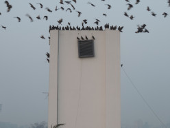 Birds perched on rooftop outside The Retreat, Jalandhar