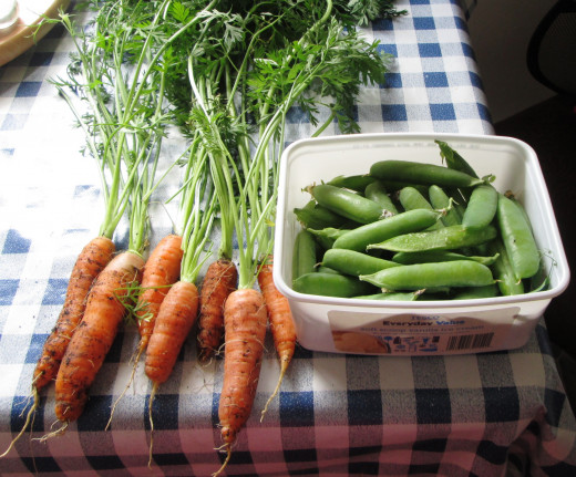 Carrots and Peas I Grew in my Garden