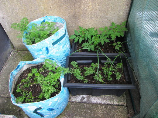 The plants growing in containers.