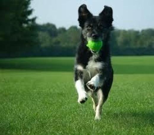 dog fetch toys