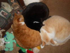 Cats know how to cuddle!