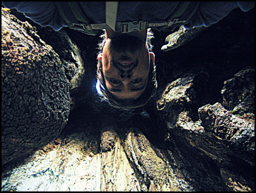 Inside the twisted tree on way up Acatenango.