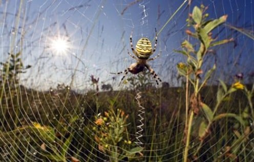 Spiders can spin webs anywhere.