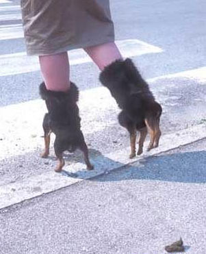 The furry high heel