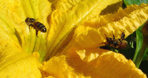 Healing with bee venom.