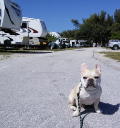 RV Camping With Canines
