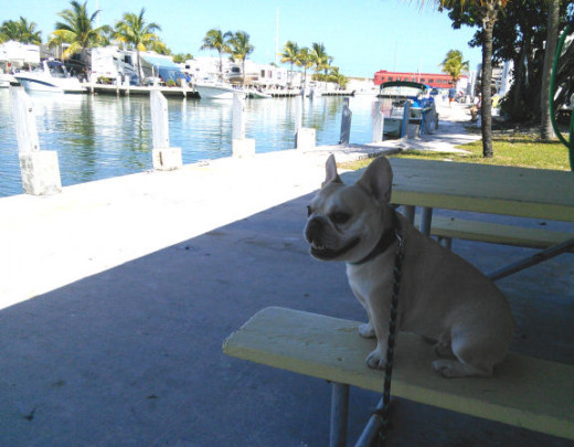 The marina at the campground is a great place to watch the world go by - and the manatees visit.