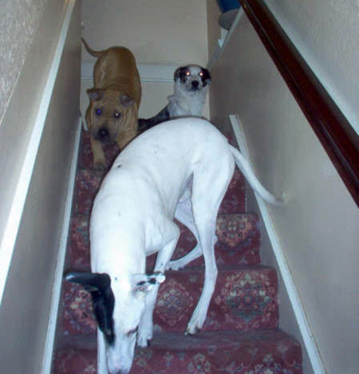 Milllie, Bracken and Blue racing downstairs to greet me.