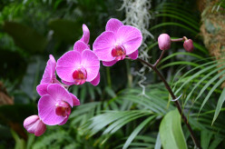 Beautiful Orchids from an Orchid Show