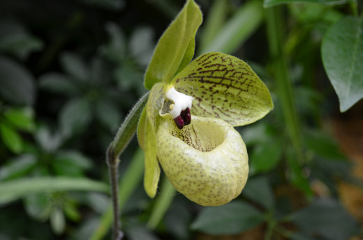 This shows more of a side view, to see just how interesting it is and more of the proportions of the green and white orchid.
