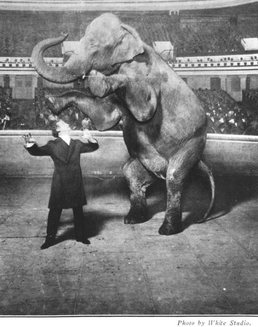 Harry Houdini (1874-1926) vanishing Jennie, the elephant, performing at the Hippodrome, New York.Others might vanish rabbits, but in 1918, on the brightly-lit stage of the Hippodrome in New York City, Houdini made a 10,000-pound elephant disappear.