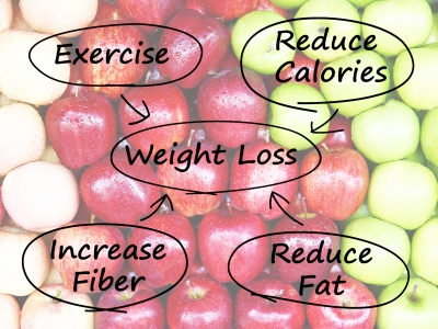The key factors to lose weight