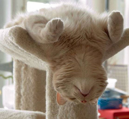 On average, cats sleep for 18 hours a day!