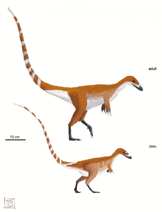 Sinosauropteryx adult and juvenile, by Matt Martyniuk, 2010.