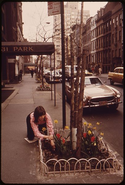 Women taking care of Daffodils along a street in the inner city.