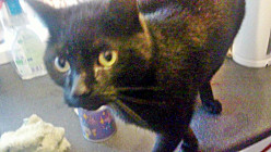 The Silent Killer Condition that Claimed a Young Cat's Life
