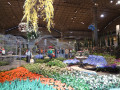 Highlights from the Chicago Flower and Garden Show 2014
