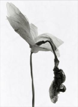 Found in UK 'Black and White Photography' magazine circa winter 2001.