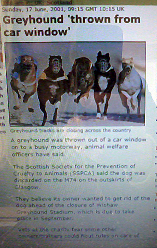 A report on the BBC News website (dated 17 June, 2001) revealed how a greyhound had been thrown out of the window of a car on the M74 motorway near Glasgow.
