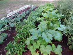 Tips for Saving Space and Time in the Vegetable Garden